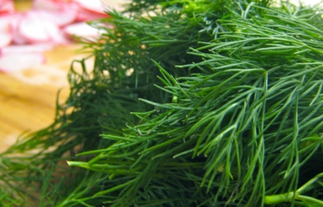 can-substitute-dill-seed-dill-weed_6a8ffadd38ef115a
