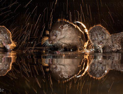 Programajánló – Természetfotós kiállítás az ország 8 nagyvárosában